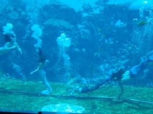 mermaidshowpix