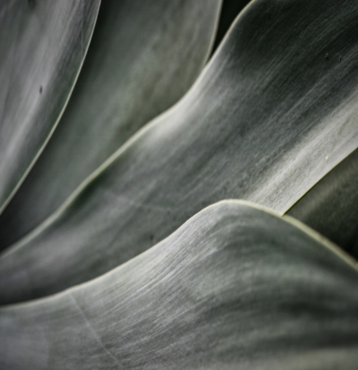 0819bagave fronds