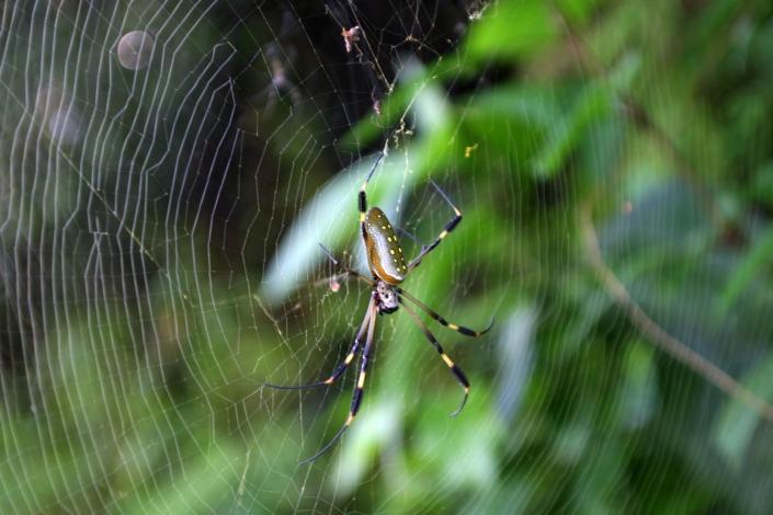 0923b cr spider