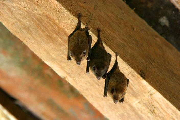 1002 cr bats