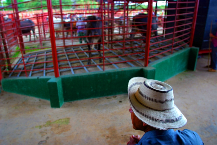 1013b pnm cattle auction